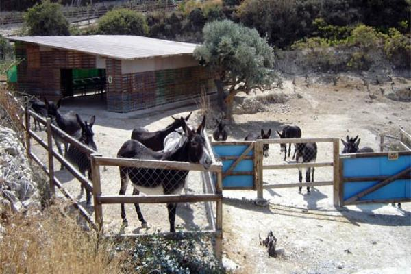 Friends of the Cyprus Donkeys Park photo